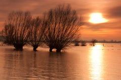 Sauces en la inundación Fotografía de archivo libre de regalías