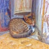 Saudi arabia makkah 2015 cat. Sleep after dffort Royalty Free Stock Photography