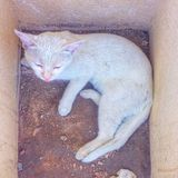 Saudi arabia makkah 2015 cat. Sleep after dffort Royalty Free Stock Images