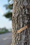 Sauf la série 2 d'arbres photo stock