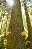 Sauf les arbres Images stock