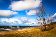 Saugatuck Dunes. A bare tree stands watch as brisk winds blow on shore at Lake Michigan on a chilly autumn day Royalty Free Stock Photo