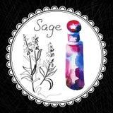 Sauge Image stock