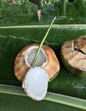 Saugen Sie Kokosnusssaft durch Winde ` s Stiel lizenzfreies stockbild