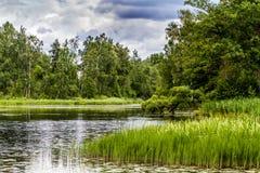 Saukas jezioro Zdjęcia Royalty Free