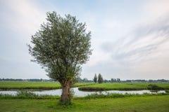 Saule dans le paysage néerlandais de polder Photo libre de droits