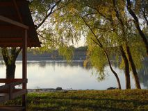 Saule dans les rayons du coucher de soleil sur la banque de la rivière de Kuban Photos libres de droits