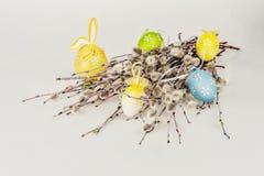 Saule de chat de Pâques Images stock