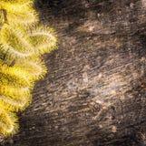 Saule de chat sur le fond en bois texturred par obscurité Images stock