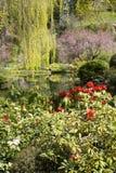 Saule et fleurs Image stock