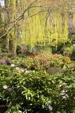 Saule et fleurs Photographie stock
