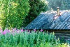 Saule-herbe fleurie Image stock