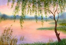 Saule par le lac Image stock