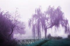 Saule pleurant dans le brouillard photographie stock