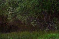Saule sur le lac photographie stock libre de droits