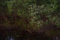 Saule sur le lac photos stock