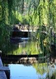 Saules et pont pleurants, Kinosaki Japon Photo stock