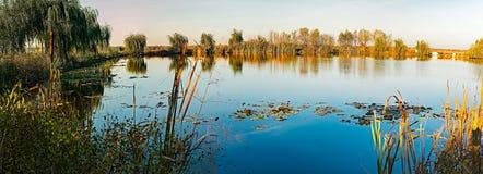 Saules sur le lac image libre de droits