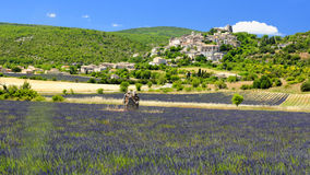 Sault in France. A lavender field near Sault in France Stock Photography