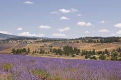 Sault lavender scene Royalty Free Stock Photo