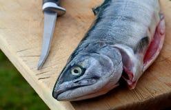 Saumons argentés de découpage des filets photos stock