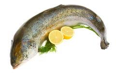 Saumons atlantiques photographie stock