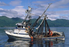 saumons de pêche de bateau Photo libre de droits