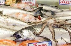 Saumons de saumon rouge et poulpe frais Images stock