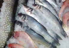 Saumons rouges frais de poissons blancs de mer photos libres de droits