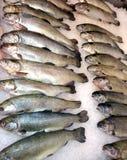 Saumons rouges frais de poissons blancs de mer photographie stock