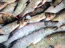 Saumons rouges frais de poissons blancs de mer images stock