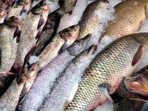 Saumons rouges frais de poissons blancs de mer images libres de droits