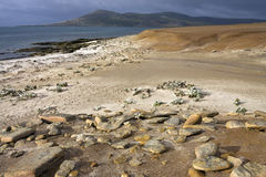 Saunders Island - The Falkland Islands Stock Images