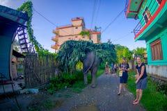 SAURAHA,尼泊尔, 9月, 02 -2017 :在运载在他们的后面的Sauraha街道的巨大的大象生叶,尼泊尔 免版税库存图片