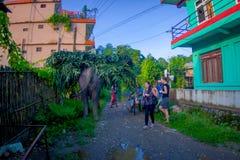 SAURAHA,尼泊尔, 9月, 02 -2017 :在运载在他们的后面的Sauraha街道的巨大的大象生叶,尼泊尔 库存图片