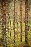 Saurer Sumpfwald Stockbild