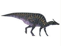 Saurolophus на белизне иллюстрация штока
