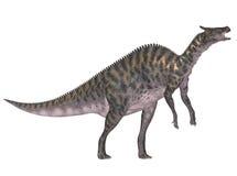 Saurolophus Royalty Free Stock Photography