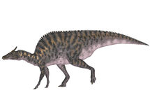 Saurolophus Royalty Free Stock Image