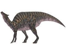 Saurolophus Stock Photos