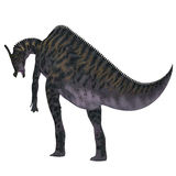 Saurolophus Dinosaur Tail Royalty Free Stock Images