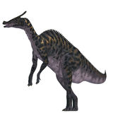 Saurolophus Dinosaur on White Royalty Free Stock Photography