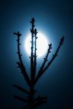 Saurons眼睛喜欢月亮云杉 库存图片