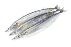 Saury ψάρια Στοκ εικόνες με δικαίωμα ελεύθερης χρήσης