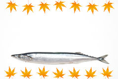 Saury Royalty Free Stock Images