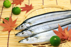 Saury Royalty Free Stock Image