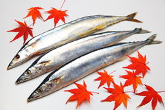 Saury Royalty Free Stock Photography