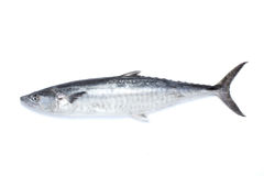 Saury fish Royalty Free Stock Images