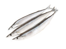 Saury fish isolated Royalty Free Stock Photo