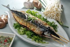 Saury Royalty Free Stock Photos